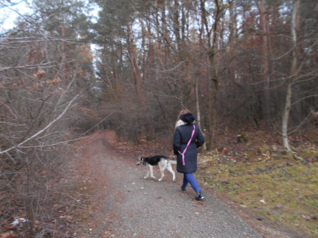 Borovicovi háj využívajú mnohí psičkári na prechádzky so svojimi štvornohými miláčikmi.