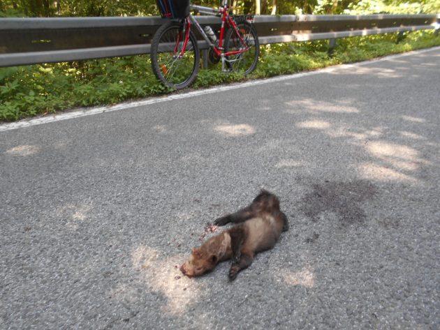 Nedokázal som to, aby som to uhynuté zviera nechal nepovšimnute ležať na ceste ďalej lebo o pár minút by ho tam ďalšie auta rozštvrtili a ten veľký krvavý fľak by mohol byť veľmi nebezpečný najmä pre motorkárov.