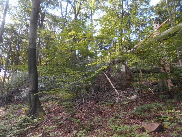 Vrchná časť stromu, ktorý je na predošlej fotografii