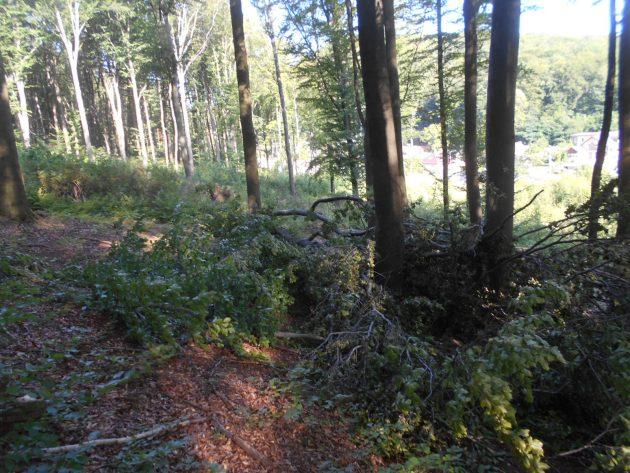 Aj tu je dobre vidieť, že v okolí toho spadnutého stromu bolo v nedávnej minulosti hodne stromov vypílených :-(