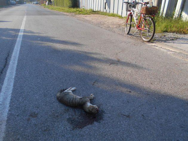 Táto mačka v zúfalstve: nemohla sa už pozerať na to kam spejeme, tak dnes ráno spáchala samovraždu, skočila do dráhy prvému vozidlu, ktoré prechádzalo pred jej obydlím.