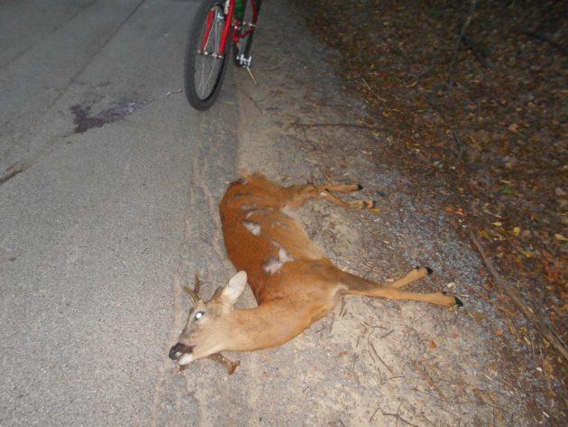 V danej chvíli sa ocitol na nesprávnom mieste, možno ho vyplašil nejaký pes... :-(