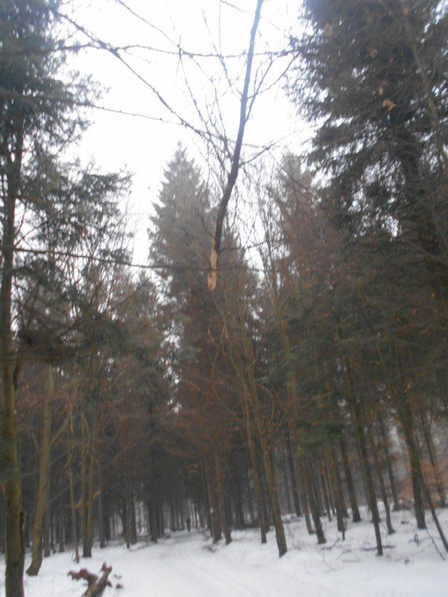 Milí turisti, pri potulkách lesom je potrebné sledovať aj koruny stromov, či vám nehrozí niečo v tejto podobe - hore medzi stromami...