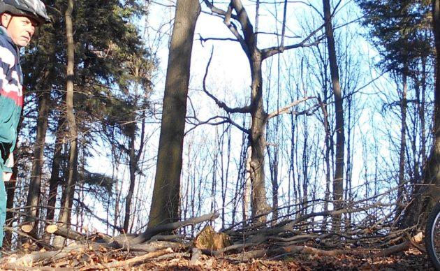 Ešte pred pár mesiacmi vzadu za mnou bol krásny hustý les... :-(