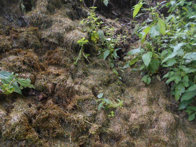 Už min. 5 rokov takto hyzdí breh myslavského potoka tráva z kosačky majiteľa pozemku za týmto plechovým plotom!
