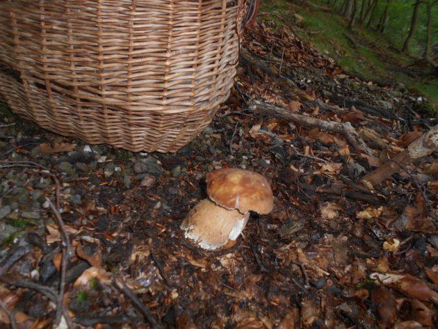 A tento vyrástol uprostred lesného chodníka :-)