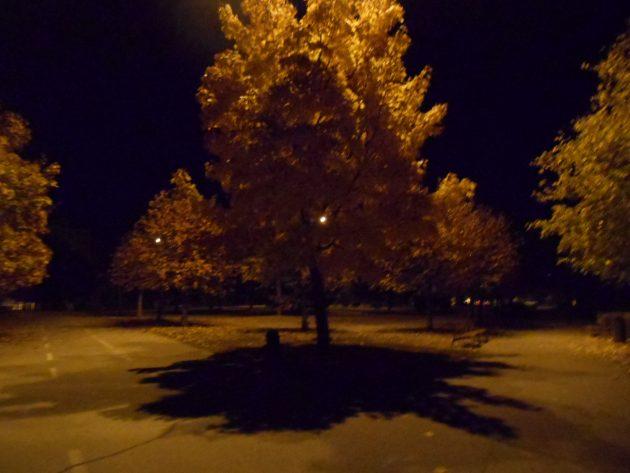 """Dúfam, že aj o niekoľko desaťročí sa budú môcť ľudia kochať takému pohľadu na """"zlatý dážď"""" vytvorený jesennou prírodou, a že aj naďalej budú rásť stromy produkujúce kyslík..."""